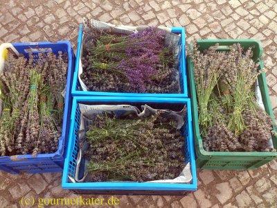 Lavendel-Ernte