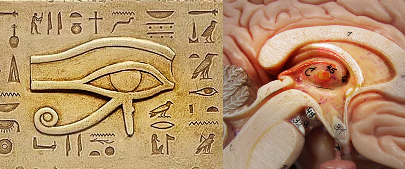 Solar System Pineal+gland