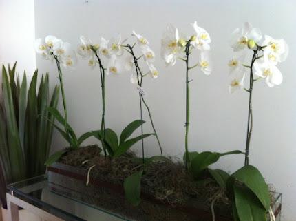 Arranjo de orquídea.