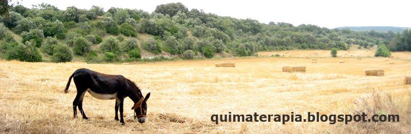 quimaterapia