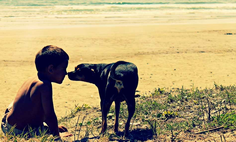 Child & Dog Love at Beach