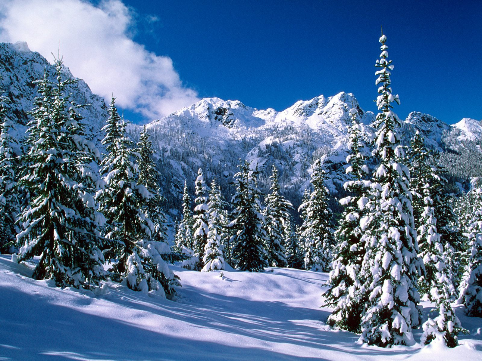 http://4.bp.blogspot.com/-9ZWHXxWO9zM/T91BSvrZXqI/AAAAAAAAGAE/9zZEAWRJrm8/s1600/winter-wallpaper-10.jpg