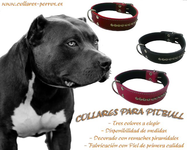 Collares para perros pitbull for Collares para perros