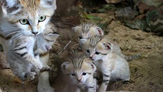 Rare Kittens