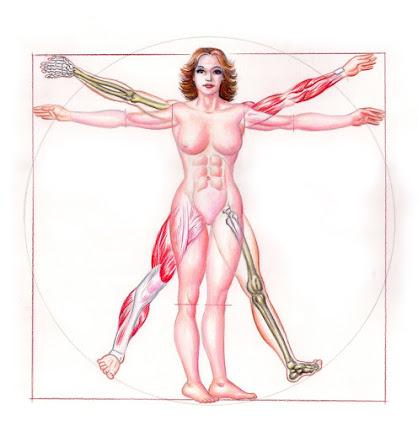 ANATOMIA FEMININA (capa rejeitada)