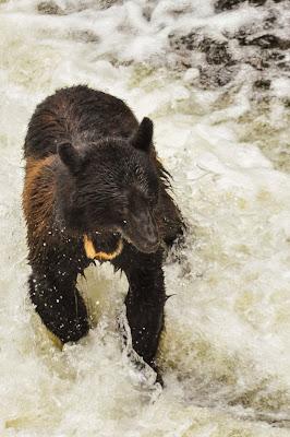 Black Bear on Ward Creek Trail