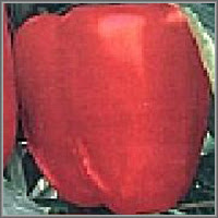 Сладкий перец сорт «Соната»