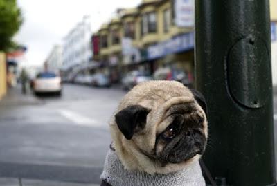 Anjing Tersedih Di Dunia