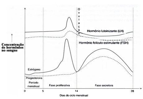 ciclos esteroides para definicion