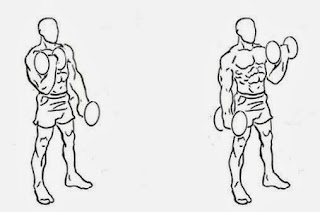 single arm alternating hammer curls Get big arms quickly with our dumbbell exercises for biceps the dumbbell hammer curl is one of the most important dumbbell exercises for biceps and has.