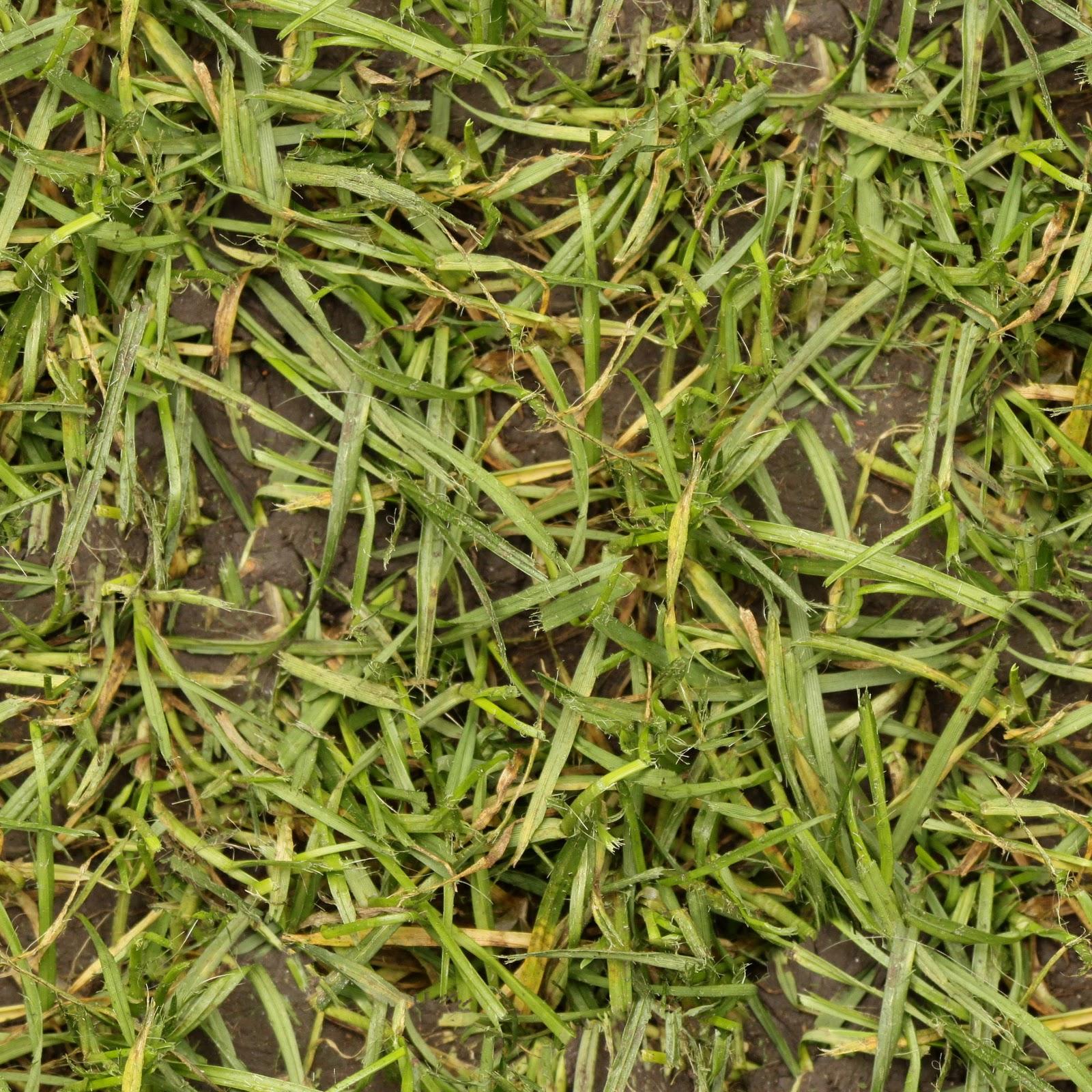 dirt grass texture seamless. Wet Grass Up-close Texture . Dirt Seamless