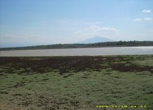 Situ Cijawura