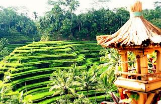 Tempat Wisata di Bali - Ubud