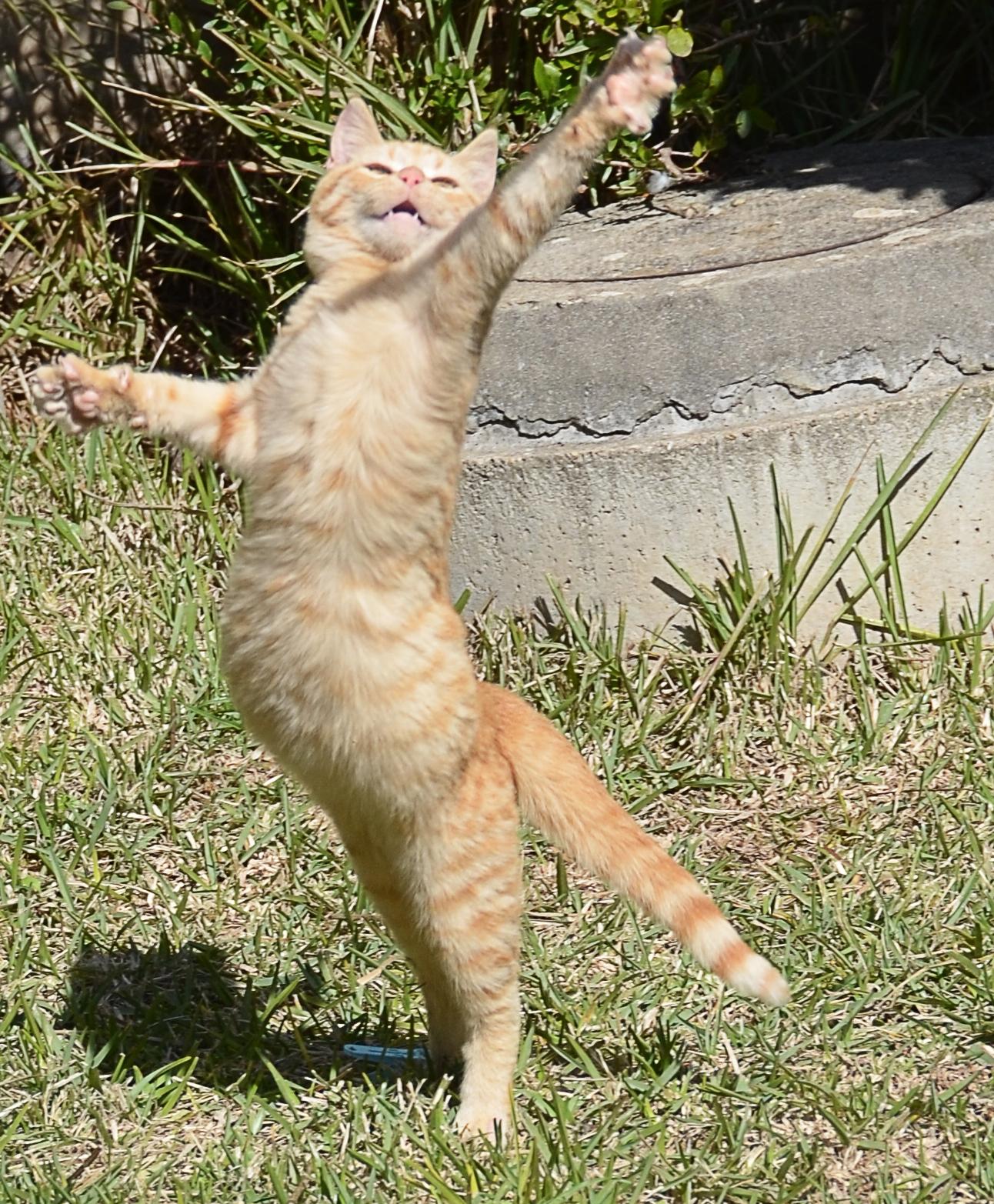 Grappige afbeeldingen: Grappige foto's; dansende kat