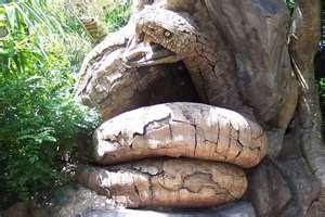 Strange Snake Tree