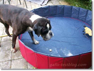 Boxer im Doggy Pool