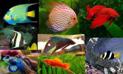 Los peces del mar noviembre 2011 for Variedad de peces