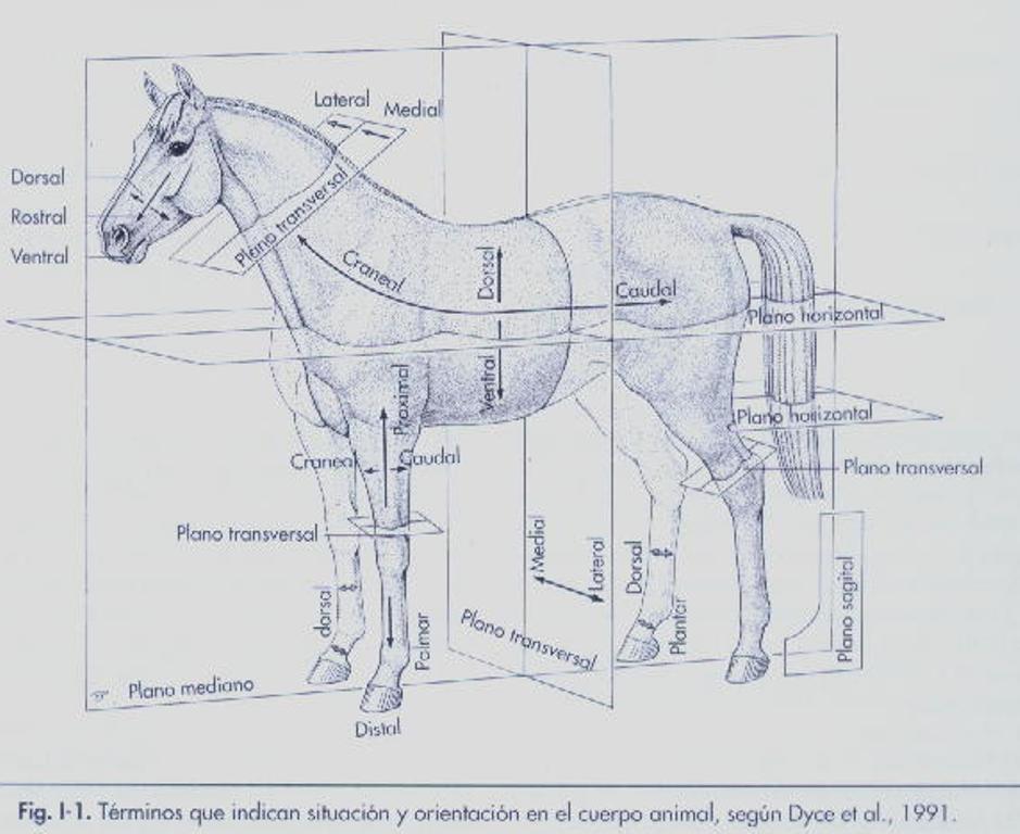 Medicina Veterinaria Zootecnista