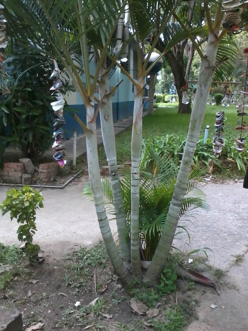 Vida a lo verde living in green adornos para colgar en - Material para jardin ...
