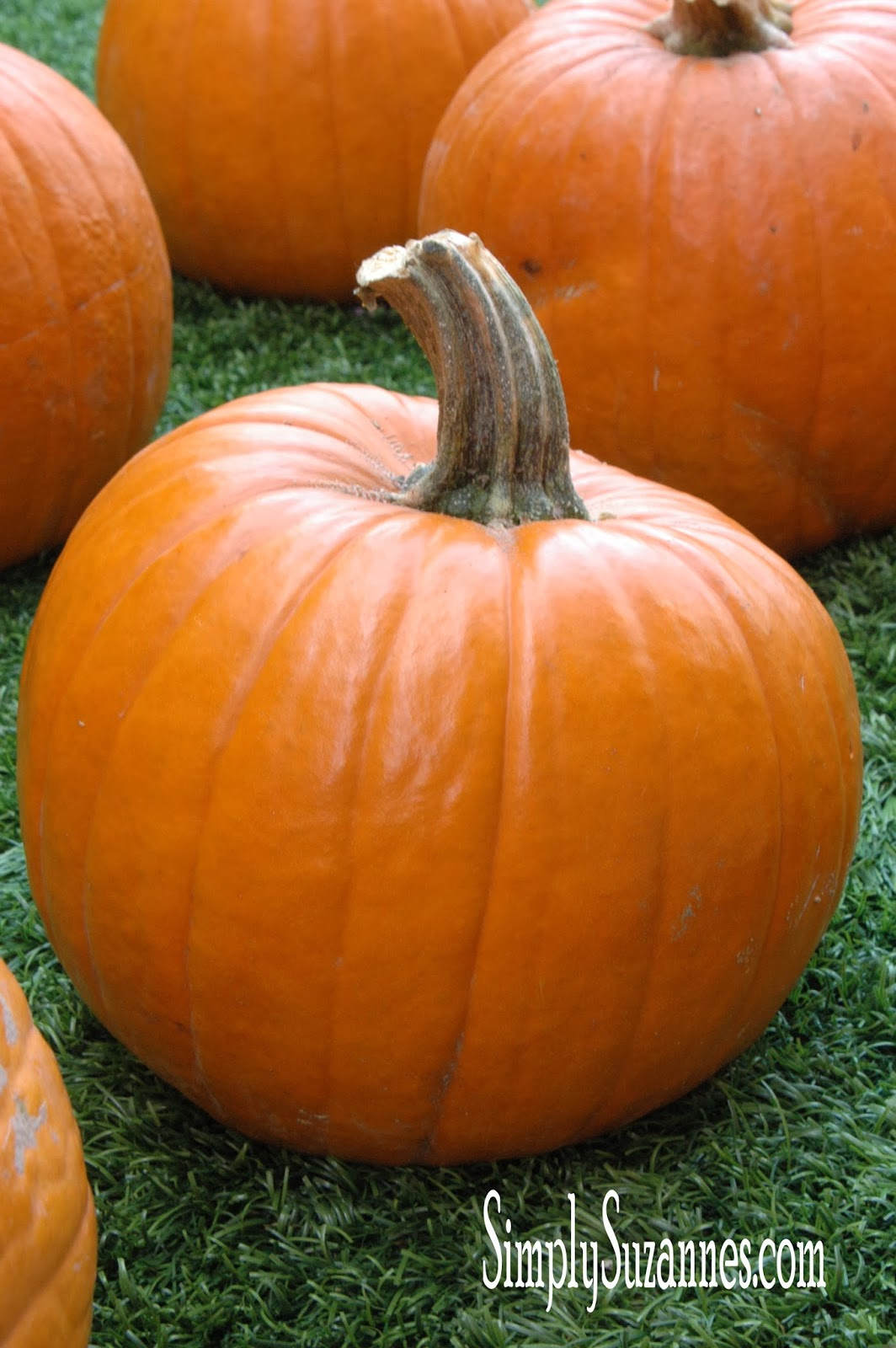 Backyard Pumpkin Patch Party :  Suzannes AT HOME fun & festive ideas for a pumpkin carving party