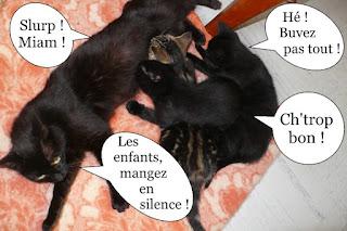 Maman chat et ses trois chatons qui têtent
