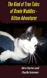 Oswin Waddles-Kitten Adventurer
