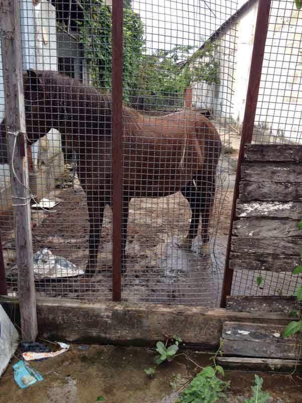 Notícias do cavalo do Caso Joelson e dos cavalos de Paquetá