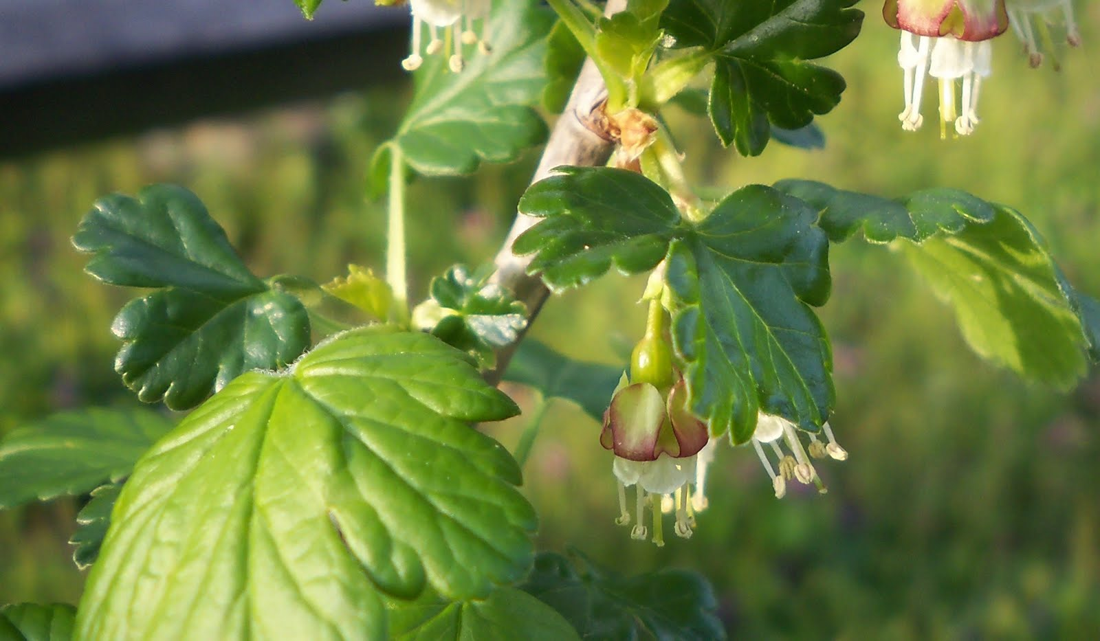 The essential herbal blog the birds and the bees and the