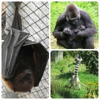 Visit Durrell Wildlife, Jersey CI