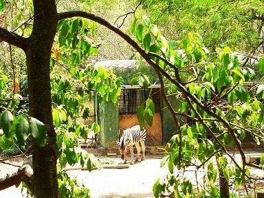 Download repliche zoo di 105