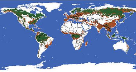les forêts primaires ont été profondément modifiées par diverses activités humaines