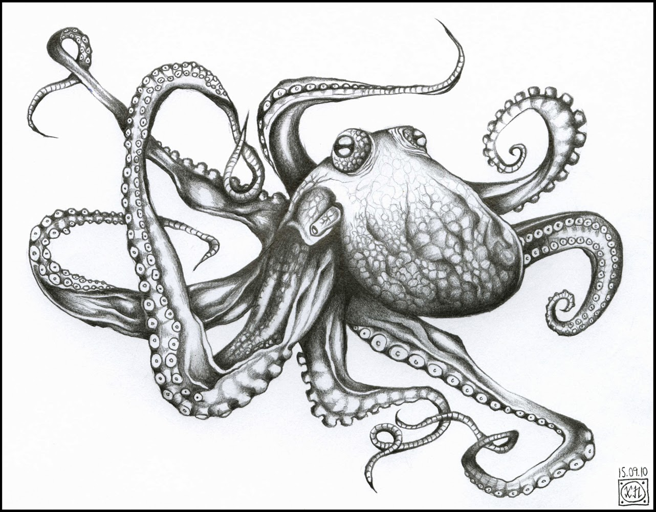 Free Octopus Drawings Black-white Drawing Octopus