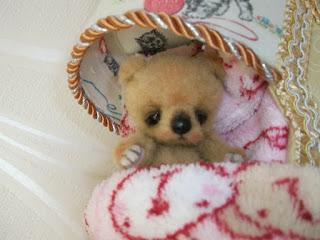 миниатюрный медвежонок тедди