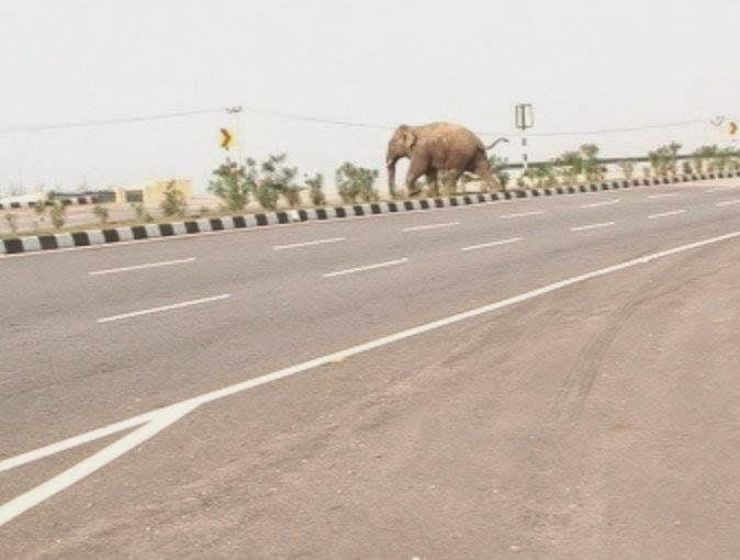 The elephant raised fiercely violence_khabrilal_news