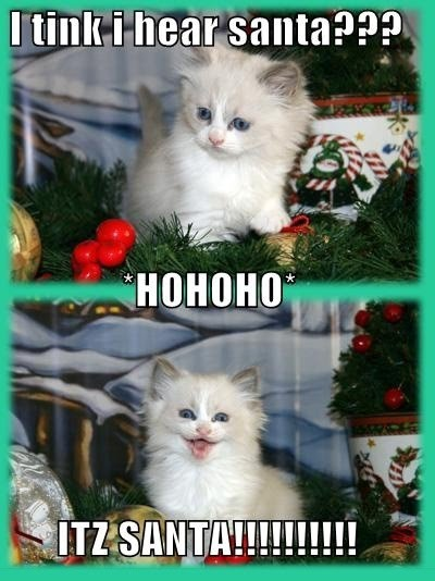 Kitty - Before And After Santa - HO HO HO
