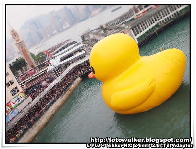 Rubber Duck@香港