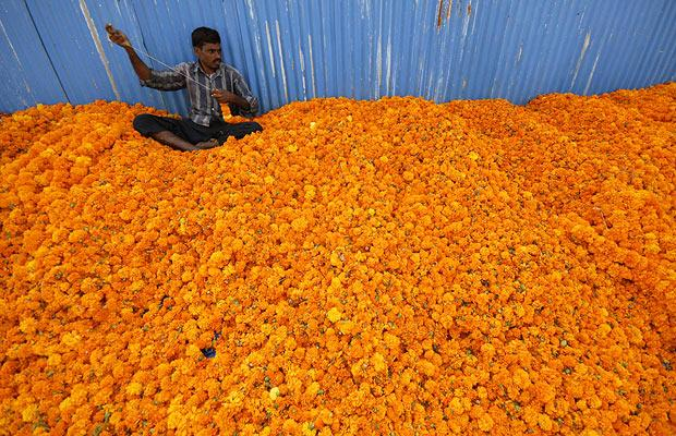 Ornaments Of Great Price In The Sight God Marigolds