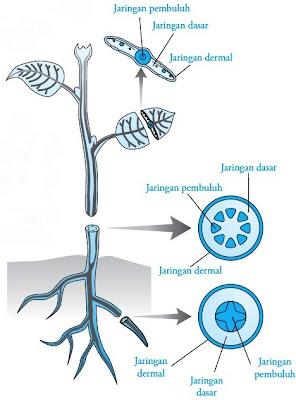 Tiga sistem jaringan tumbuhan