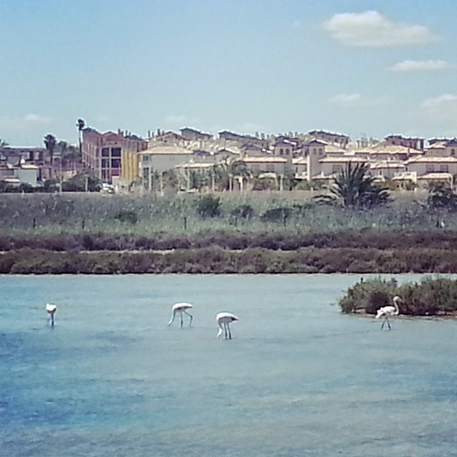 flamingos-la-marina-spain