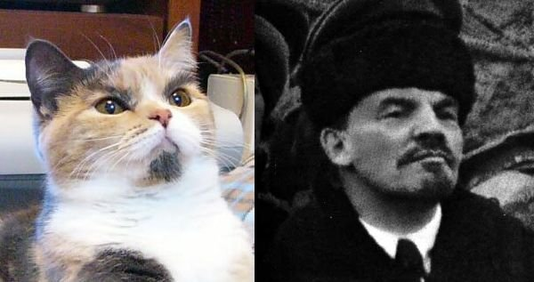 Cats that look like stalin 10