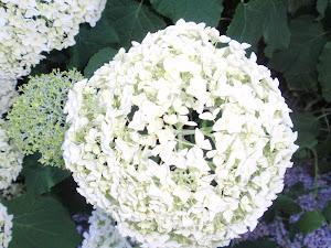 Prachtige bloem