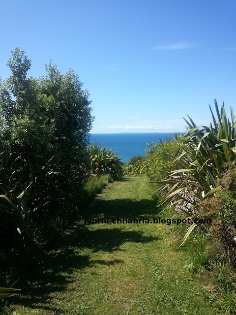 tiritiri maatangi island walks