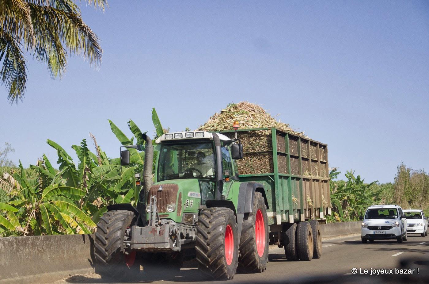 Guadeloupe - canne à sucre