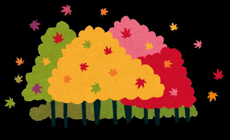 紅葉した森 : 【かわいい秋の ...