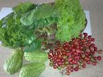 Verduras e hortaliças de minha hortinha