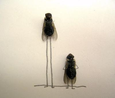 Afinal as moscas sao uteis depois de mortas Image001
