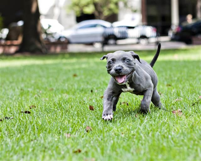 Rigor Mortis In Small Dogs