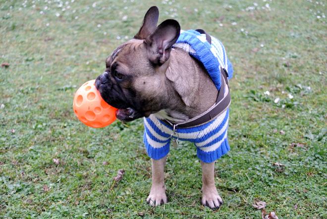 French Bulldog Ball