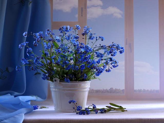 Hình ảnh hoa đẹp 22