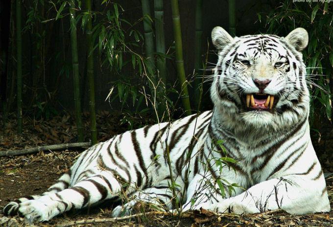 34 Animaux En Voie De Disparition A Cause De L Homme Ecologie